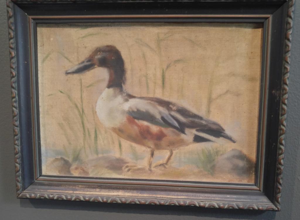 Tom's duck